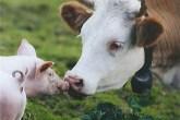animais-amigos1