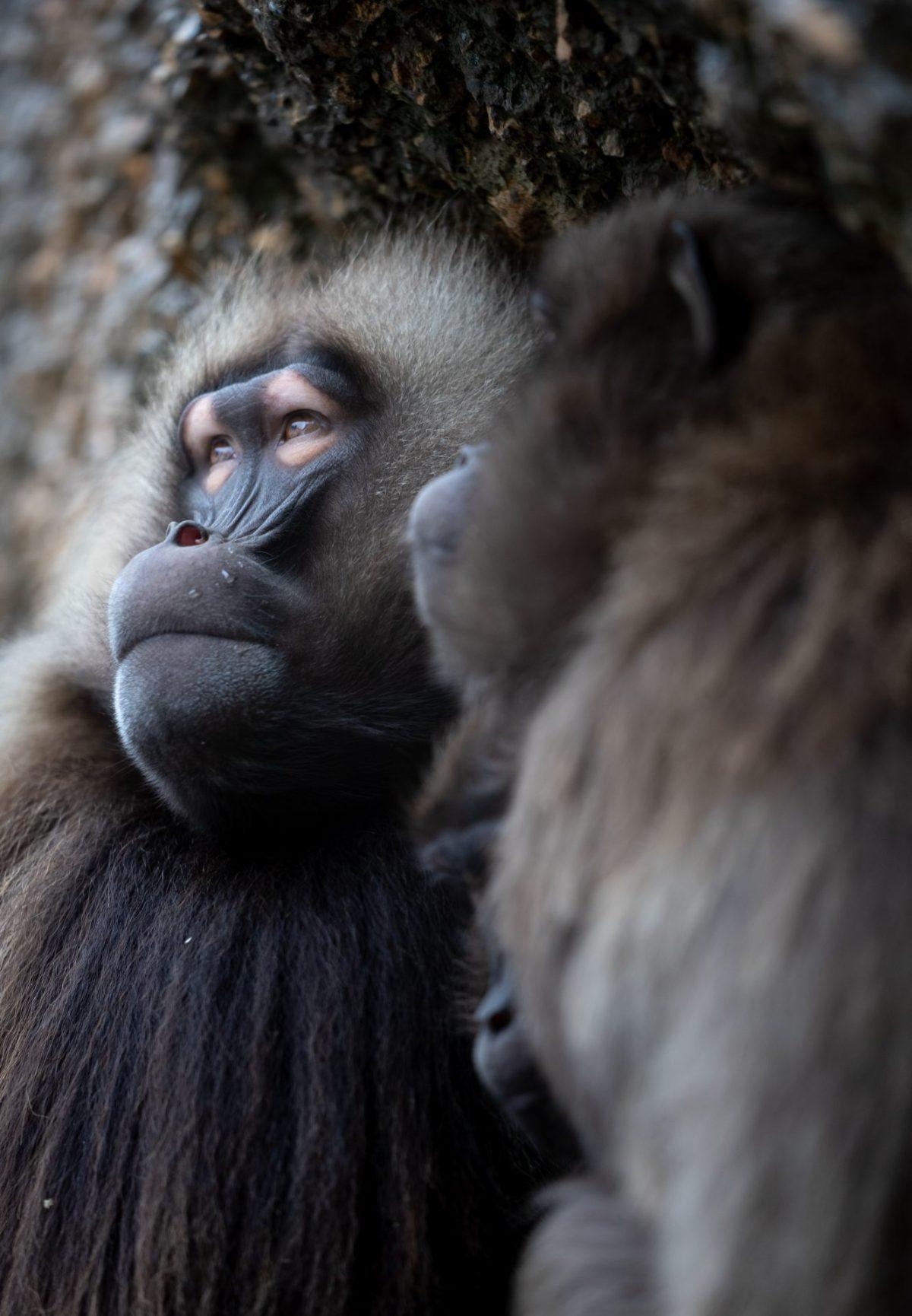Monkey-02264