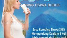 susu kambing untuk ibu hamil