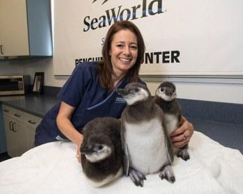 penguins Sea World