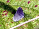 Small blue 2