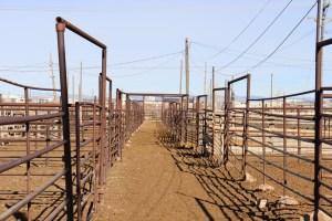 cedar livestock market
