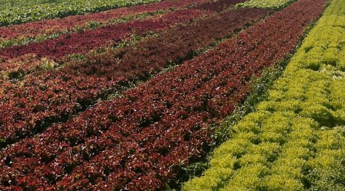 Salaatti nro 60 – Treenipäivän pikasalaatti