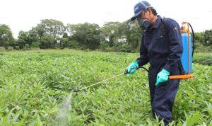 Plaguicidas y Pesticidas