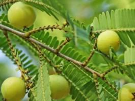 आंवला जूस के फायदे - Amla Juice Benefits in Hindi Fayde For Hair