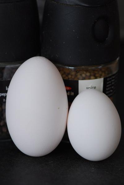 Eggs Galore! Suvir