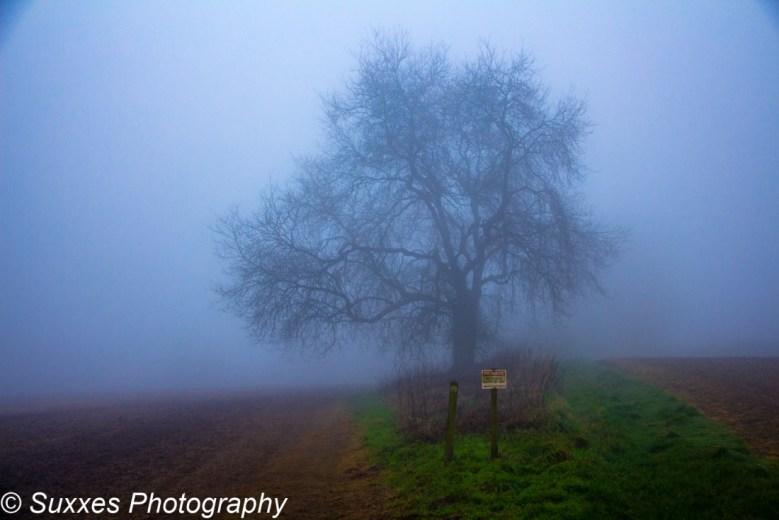 ash tree fog
