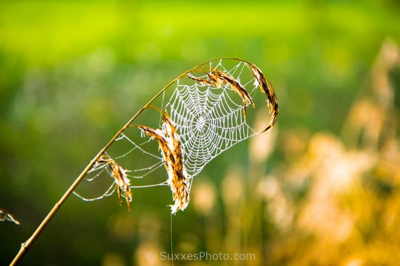 cobweb arlingham