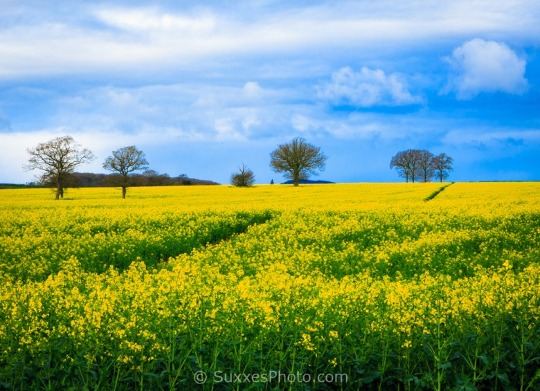 rapeseed droitwich