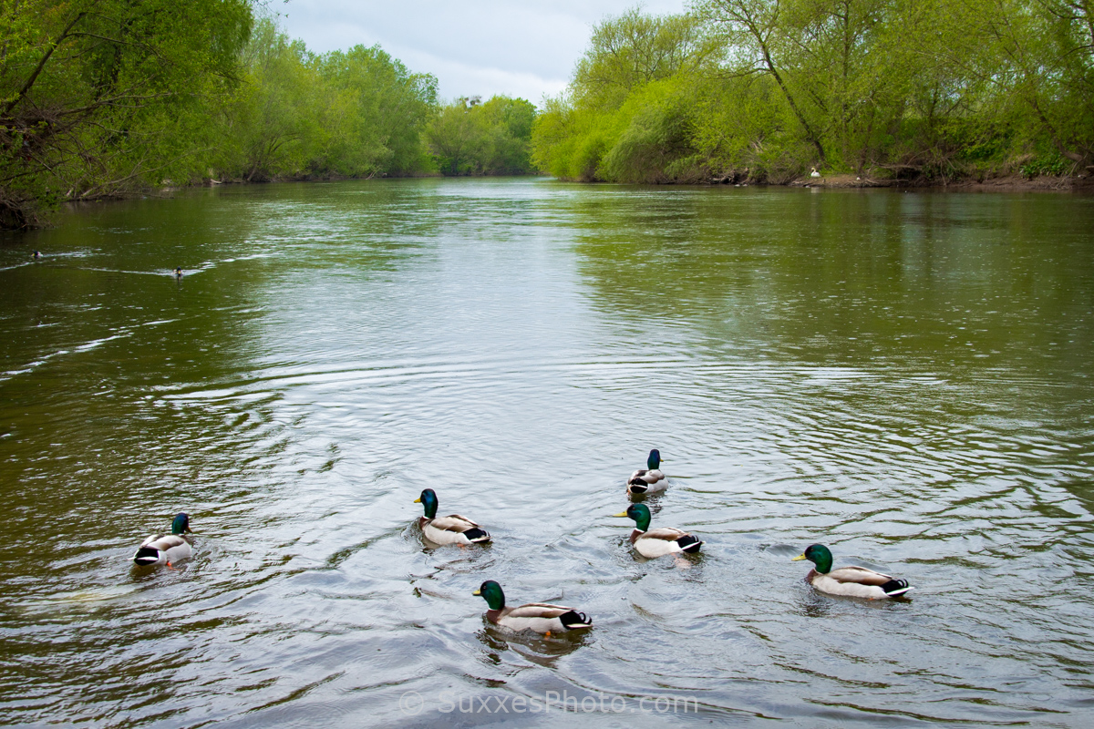 mallards river wye
