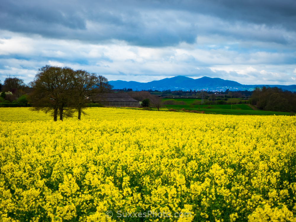 rapeseed Droitwich Malverns