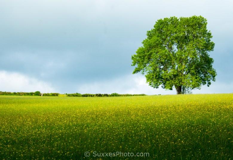 buttercup meadow abbey dore