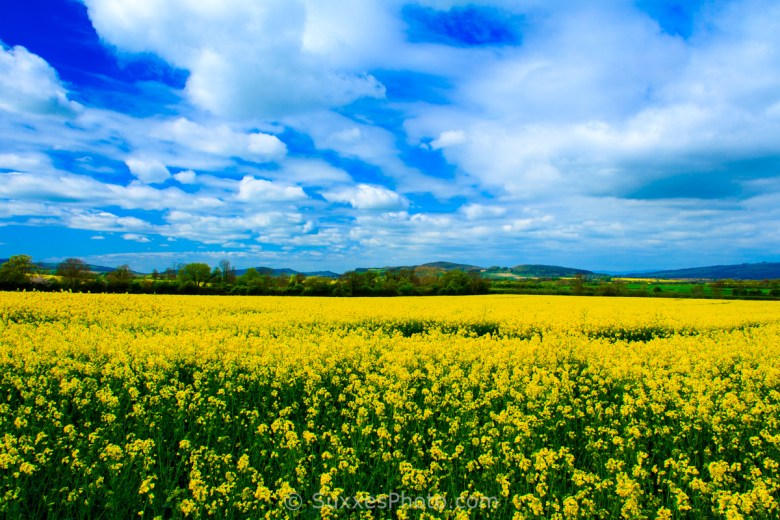 rapeseed stanton cotswold