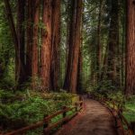 Cathedral Grove in MacMillan Provincial Park, BC, Canada (Click on thumbnail to view full size)