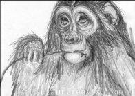 Pencil Monkey