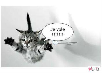 chat-qui-vole-50169