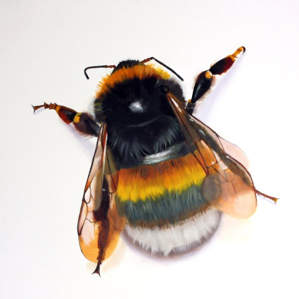 Bumble Bee Insect Drawing