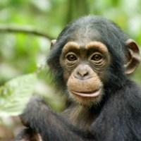 Voor een bord apenhanden trokken wij onze neus niet op