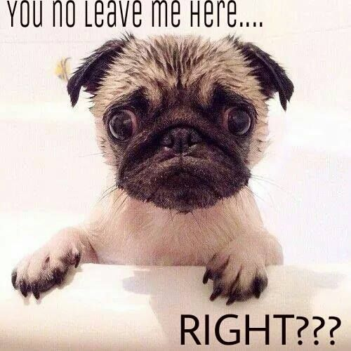 you no leave me here right pug