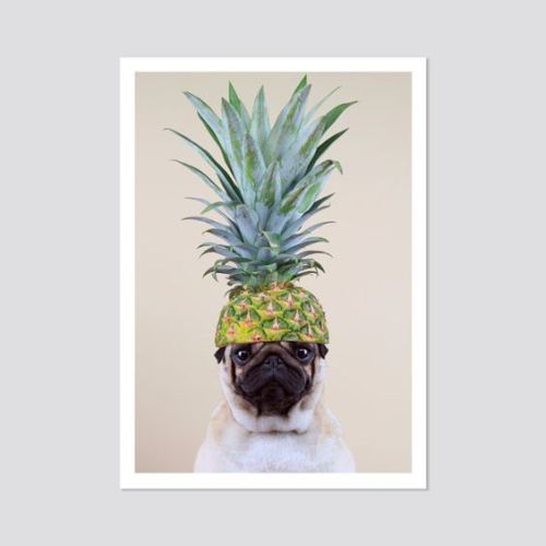 pug with pineapple on head from Etsy