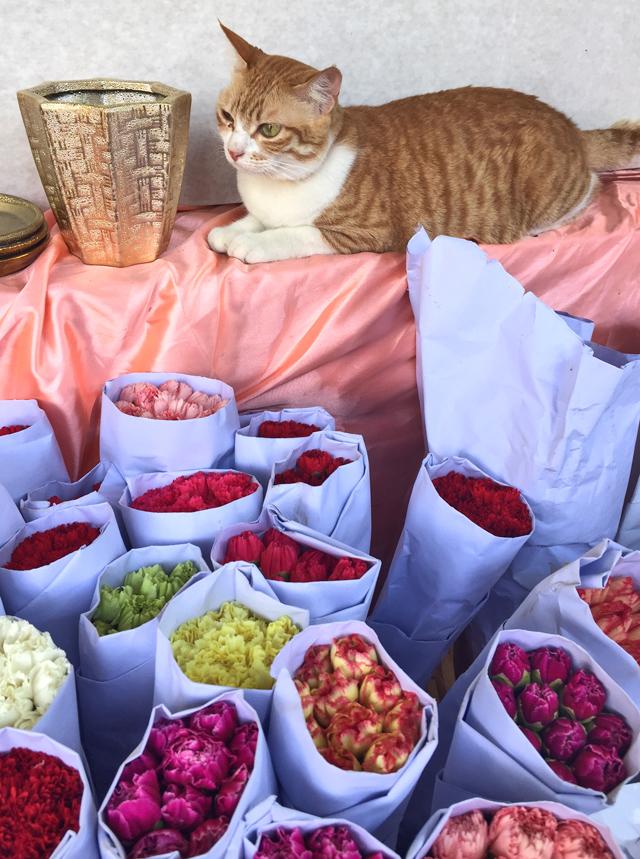 cat at flower market hong kong