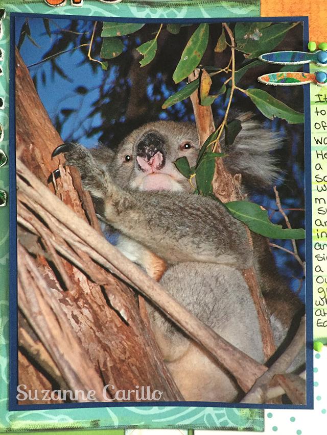 koala bear 2006 suzanne carillo