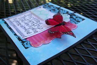 Butterfly_side500