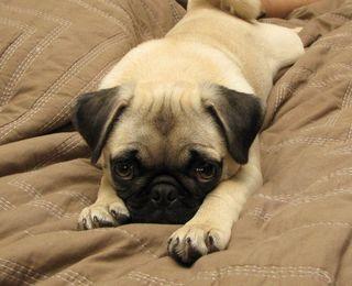Zoe puppy
