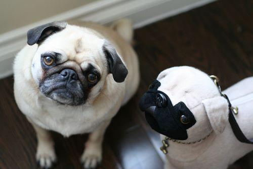 Zoe pug and pug handbag