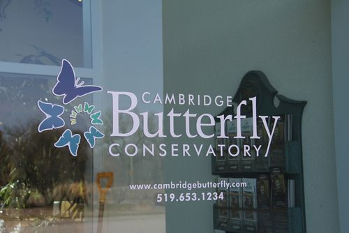 Butterfly conservatory cambridge