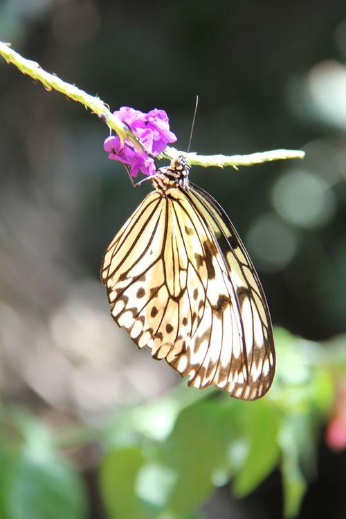 Buttefly in sunlight