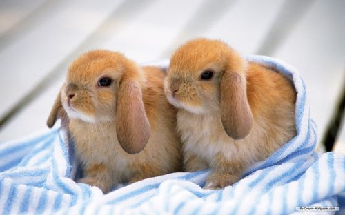 Bunnies-bunny-rabbits-16437997-1280-800
