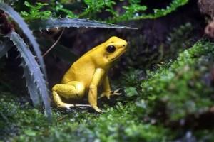 Afbeelding: https://pixabay.com/en/frog-toxic-yellow-netherlands-1463831/