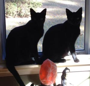 Isis and Anubis sitting in the window