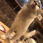 心斎橋の猫カフェ&ペットショップ 猫喫茶空陸家 心斎橋店に初来店