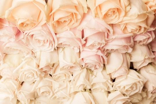 Beautiful pastel roses in Paris
