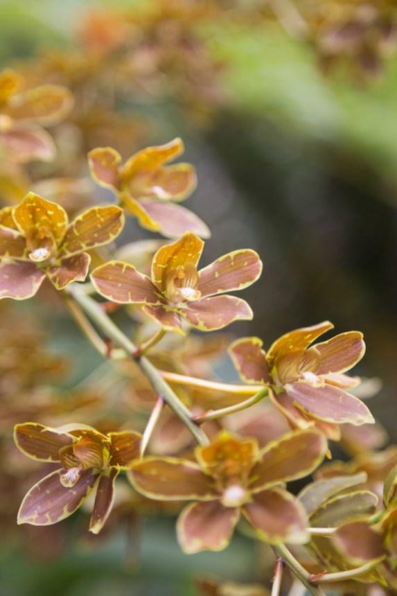 Kauai Hindu Monastery Orchid Flowers