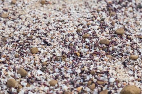 Beach Sand at San Cristobal Beach