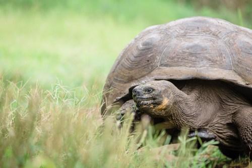 Giant Tortoise Reserve on Santa Cruz in Galapagos National Park