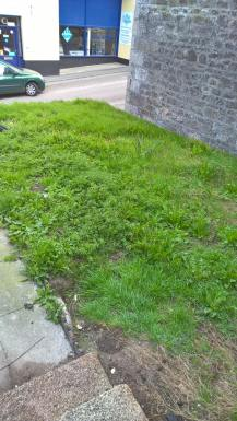 Is this grass or weeds?