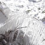 自然が生む氷の芸術!猪苗代湖の「しぶき氷」を見てきたよ。