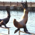 おたる水族館は海獣ショーが満載のおすすめ水族館だった