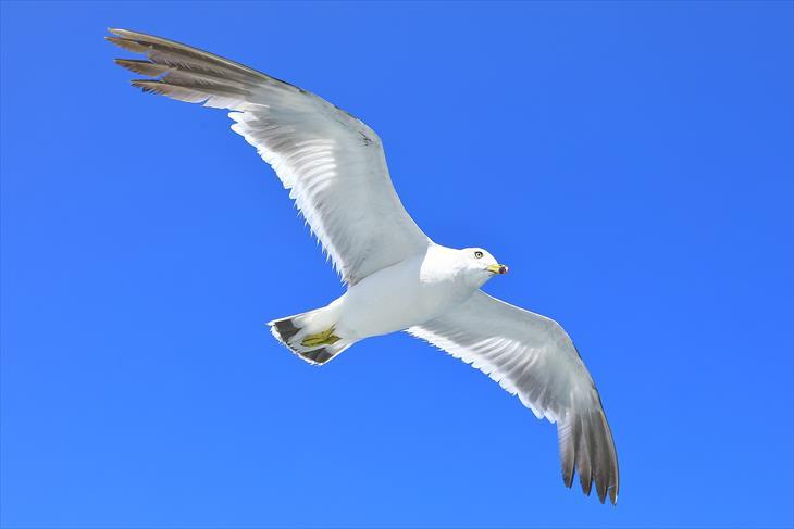 小樽海上観光船 あおばとから見る海鳥