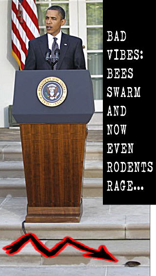 320wde_Obama-Makes-Rodents-Rage