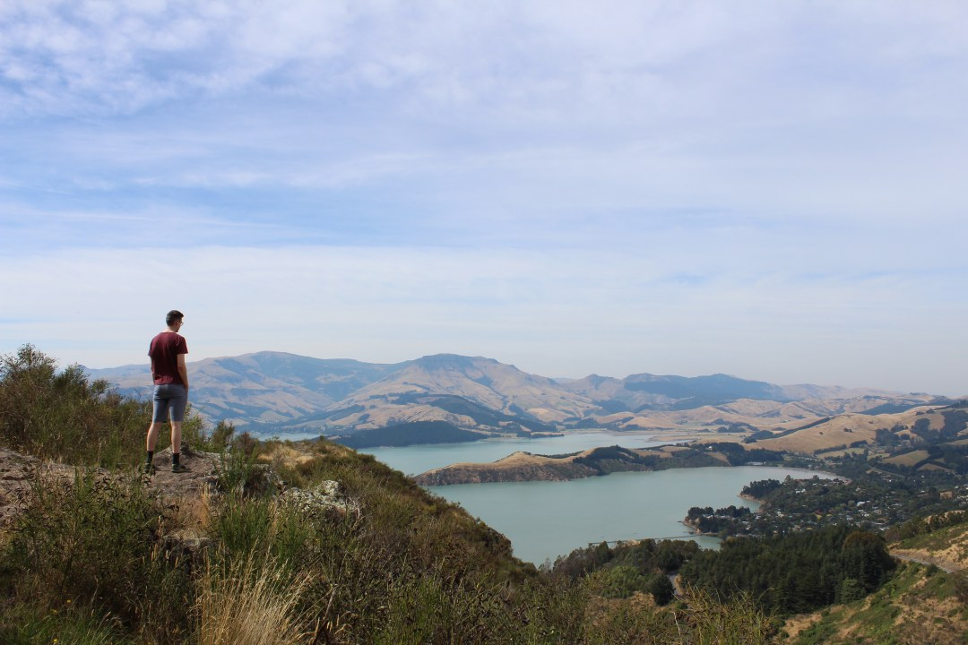 man stands at lookout over banks peninsula from the port hills christchurch