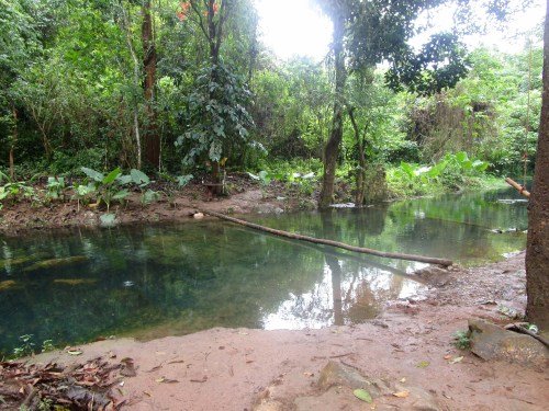 Clear spring water pool surrounded by jungle with a log across the water