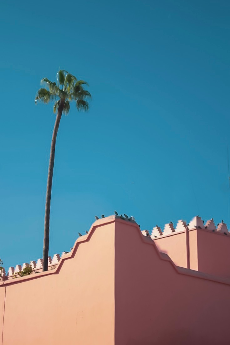 blue skies and marrakech rooftops with palm tree