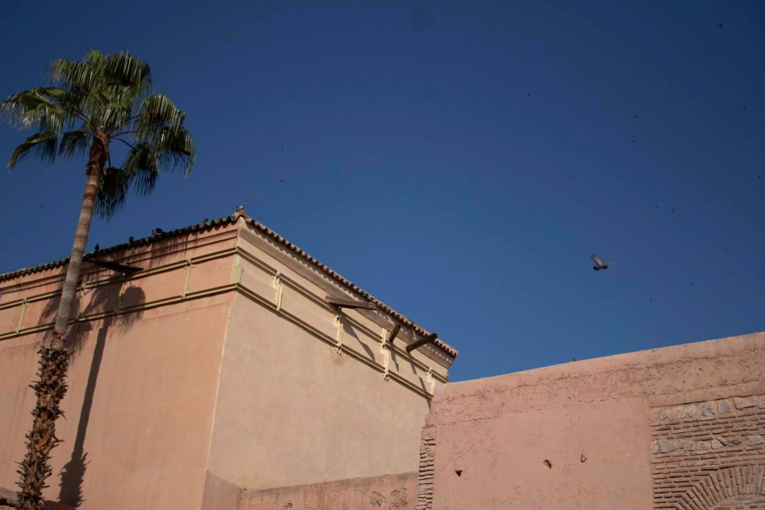coloured rooftops and blue skies with bird flying in marrakech