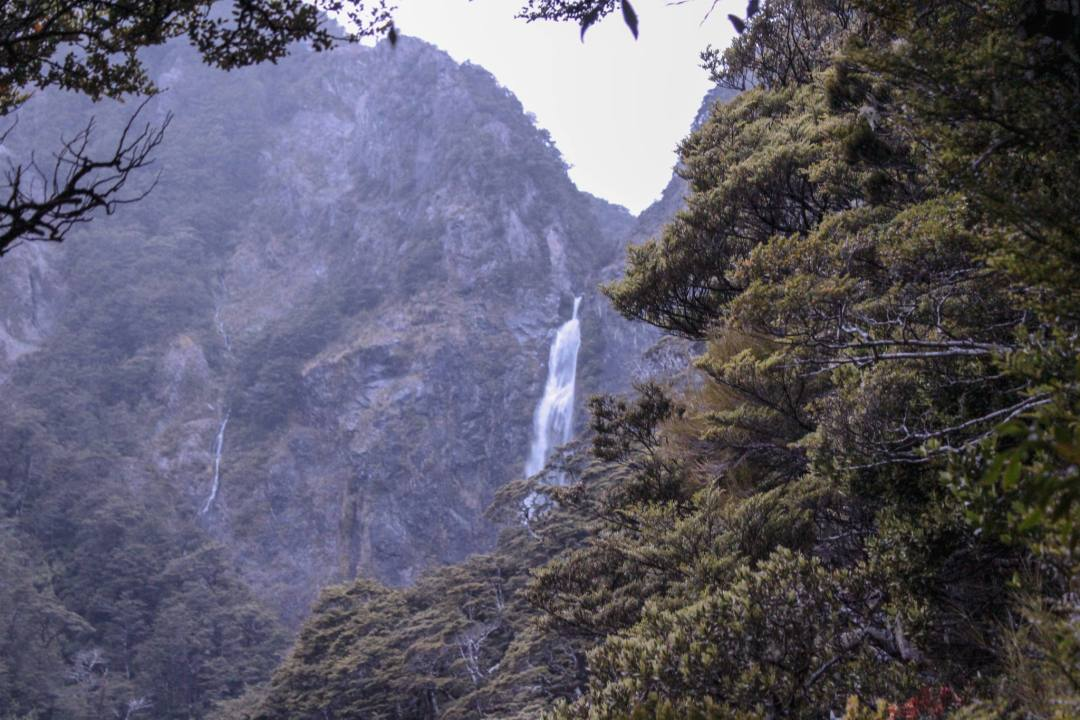 glimpse of waterfall between thick forest trees