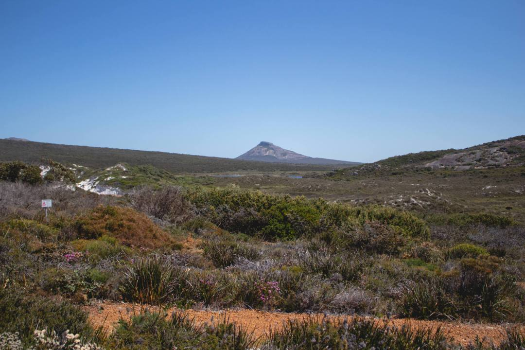 Green bushland and frenchman's peak mountain in distance